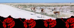 namibia-4wd-rental.jpg